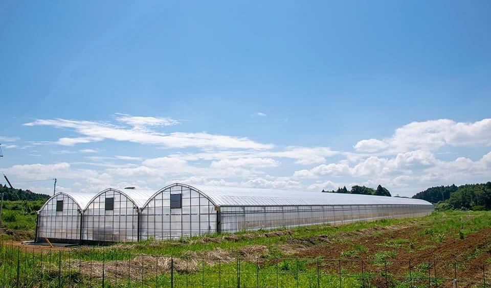 太陽光利用型水耕栽培ハウス